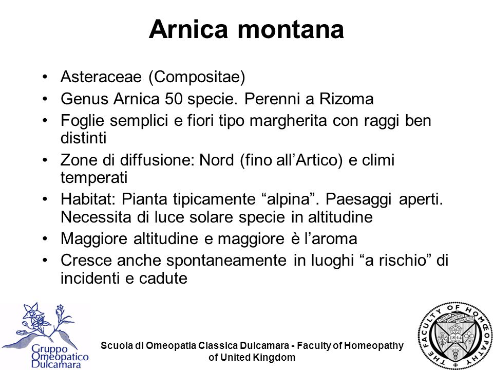 Arnica montana Asteraceae (Compositae)