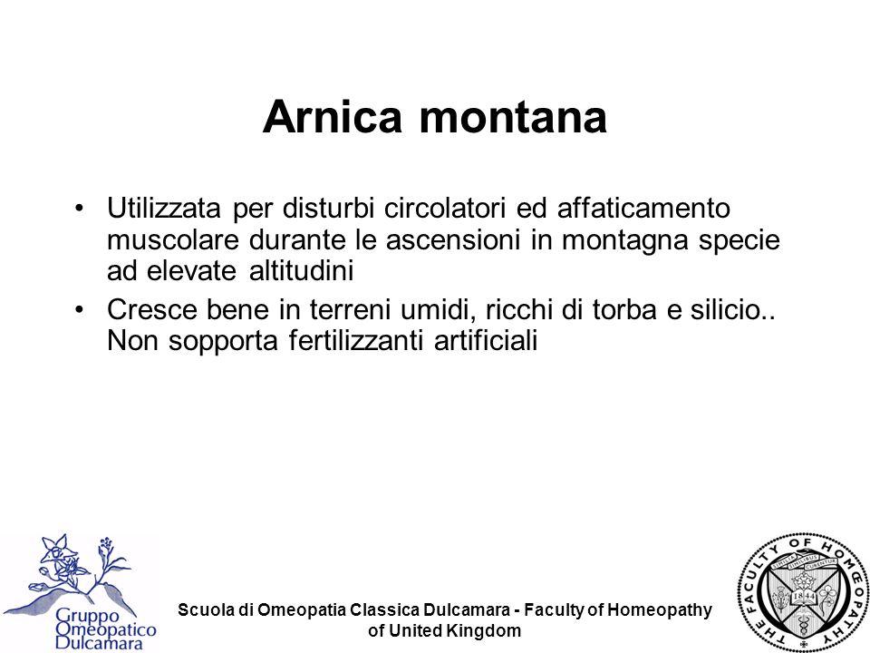 Arnica montana Utilizzata per disturbi circolatori ed affaticamento muscolare durante le ascensioni in montagna specie ad elevate altitudini.