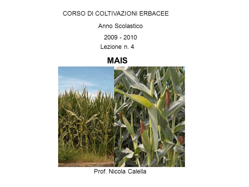 MAIS CORSO DI COLTIVAZIONI ERBACEE Anno Scolastico 2009 - 2010