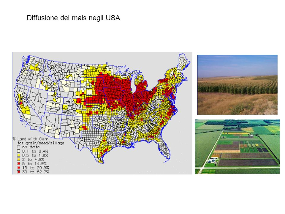Diffusione del mais negli USA