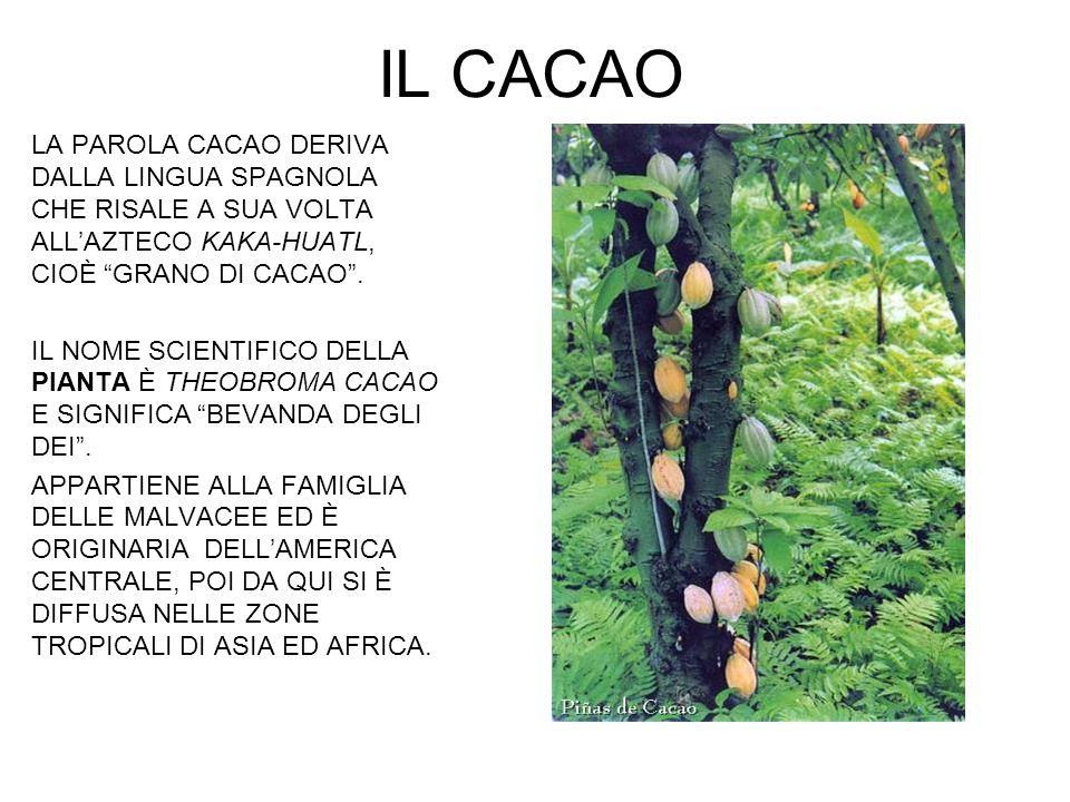 IL CACAO LA PAROLA CACAO DERIVA DALLA LINGUA SPAGNOLA CHE RISALE A SUA VOLTA ALL'AZTECO KAKA-HUATL, CIOÈ GRANO DI CACAO .