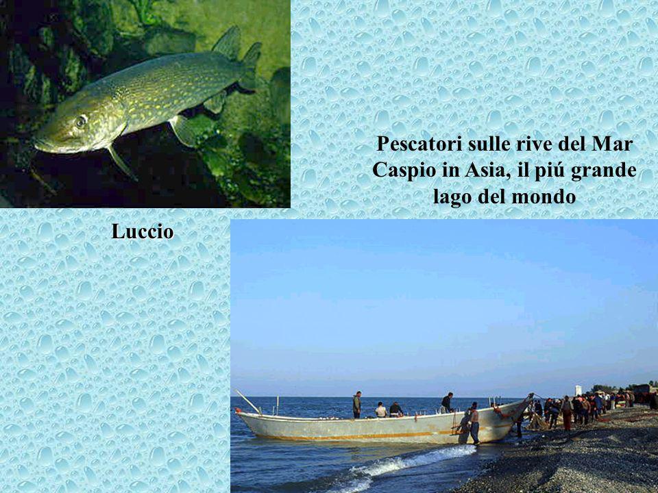 Pescatori sulle rive del Mar Caspio in Asia, il piú grande lago del mondo