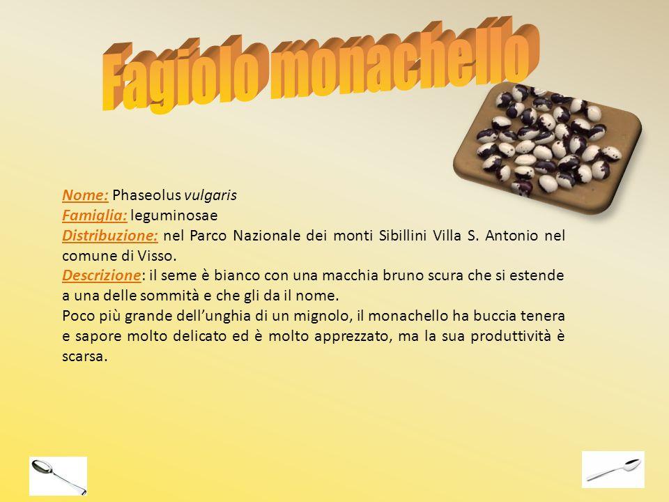 Fagiolo monachello Nome: Phaseolus vulgaris Famiglia: leguminosae
