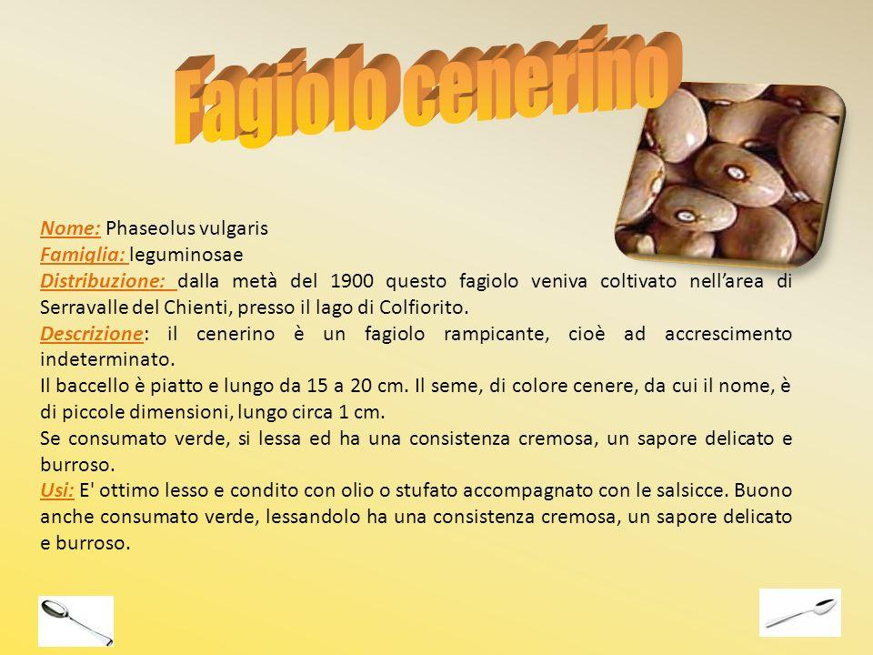 Fagiolo cenerino Nome: Phaseolus vulgaris Famiglia: leguminosae