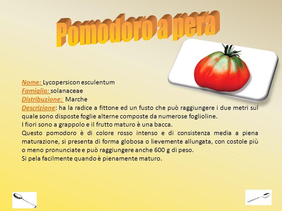 Pomodoro a pera Nome: Lycopersicon esculentum Famiglia: solanaceae