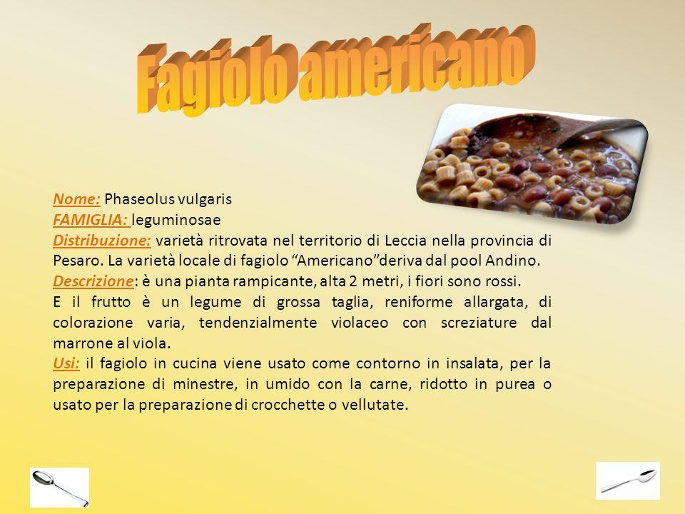 Fagiolo americano Nome: Phaseolus vulgaris FAMIGLIA: leguminosae