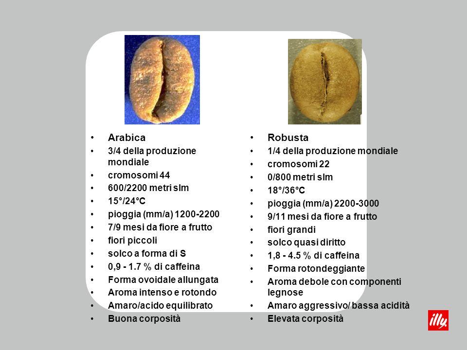 Arabica Robusta 3/4 della produzione mondiale cromosomi 44