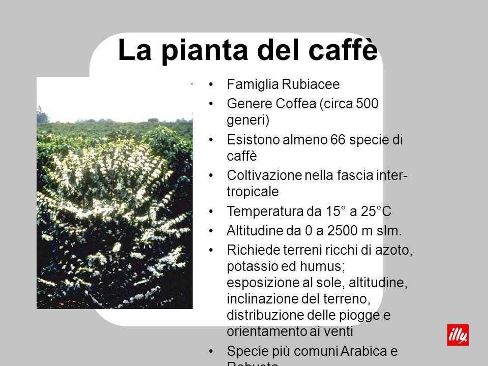 La pianta del caffè Famiglia Rubiacee Genere Coffea (circa 500 generi)
