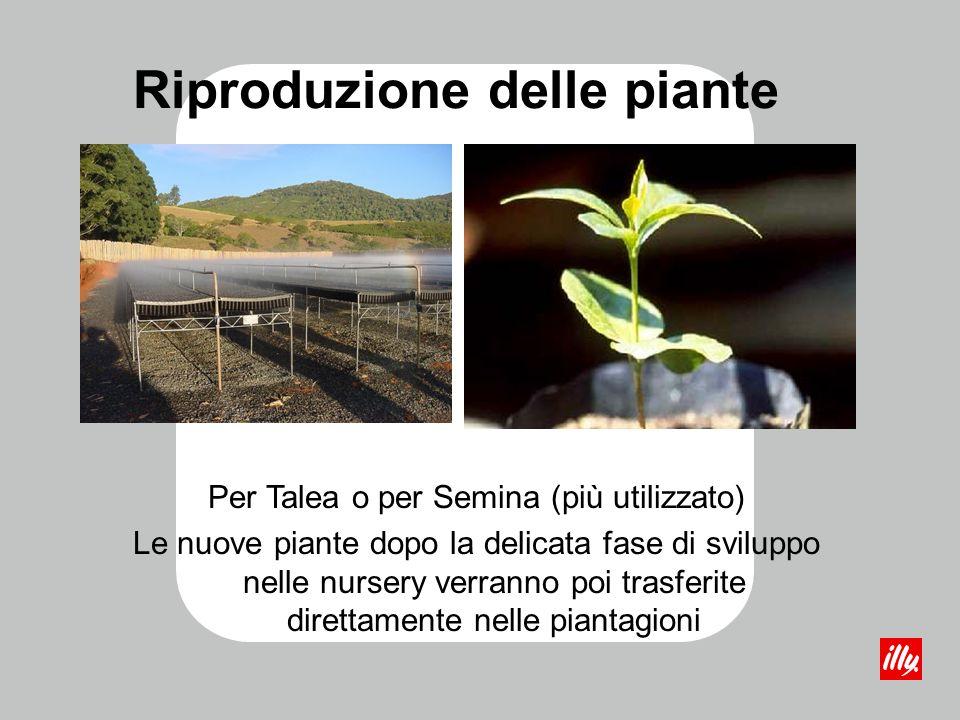 Riproduzione delle piante