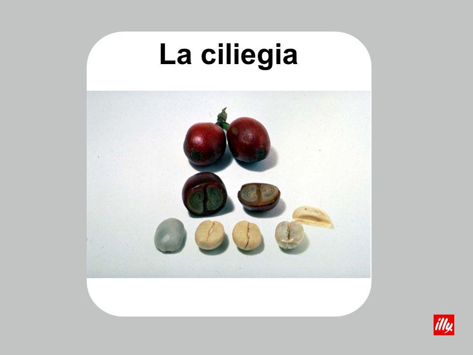 La ciliegia