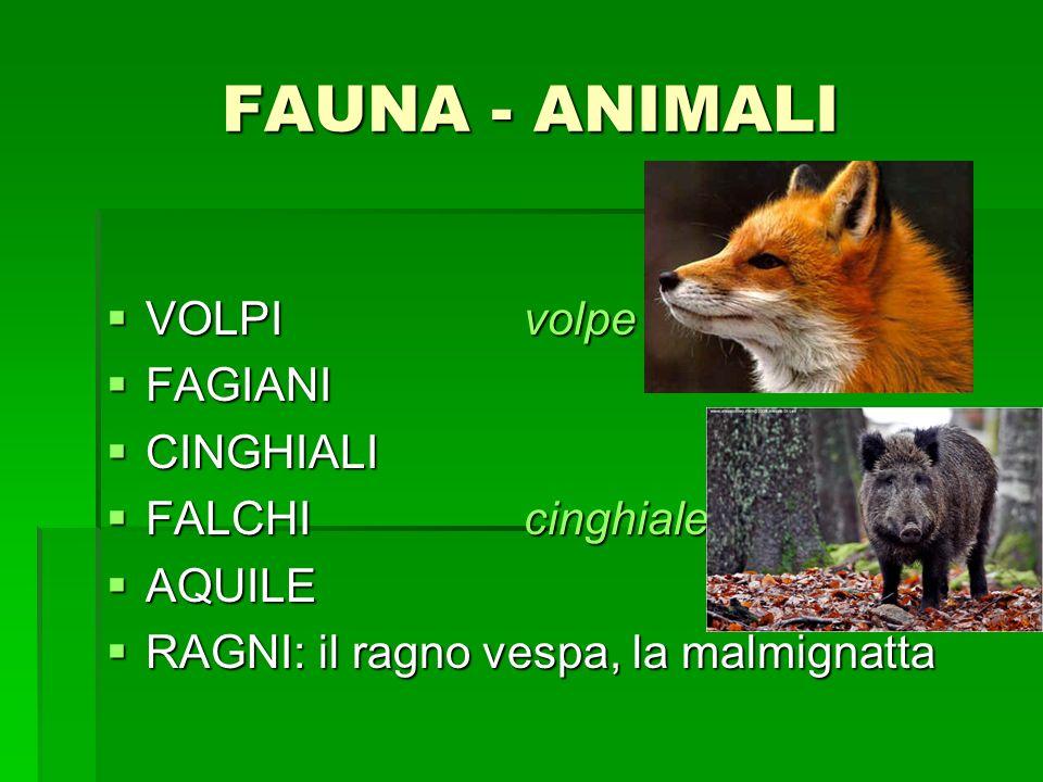 FAUNA - ANIMALI VOLPI volpe FAGIANI CINGHIALI FALCHI cinghiale AQUILE