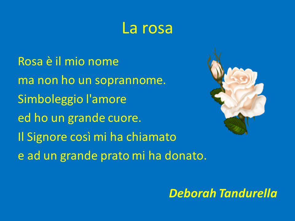 La rosa Rosa è il mio nome ma non ho un soprannome.