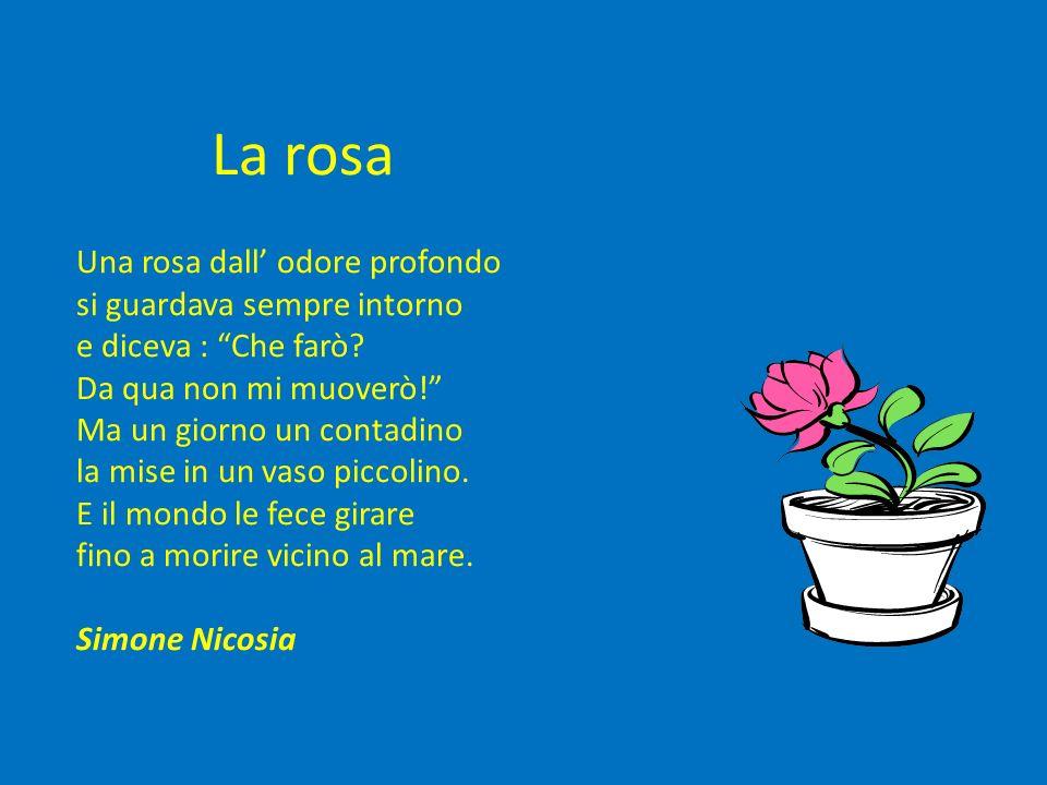 La rosa Una rosa dall' odore profondo si guardava sempre intorno