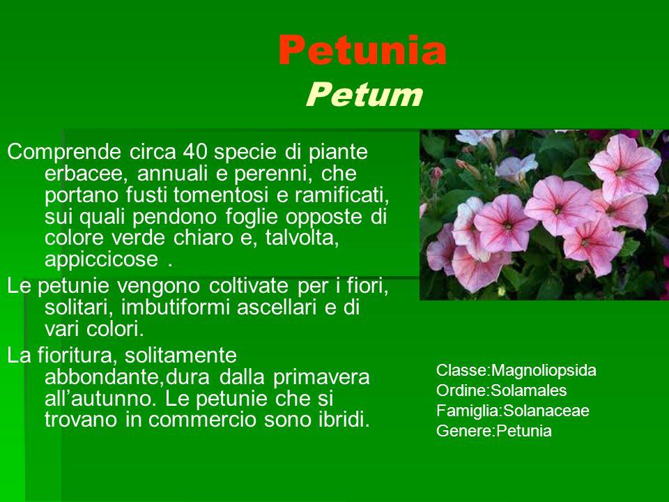 Alla scoperta della biodiversit nella villa comunale di for Petunie perenni