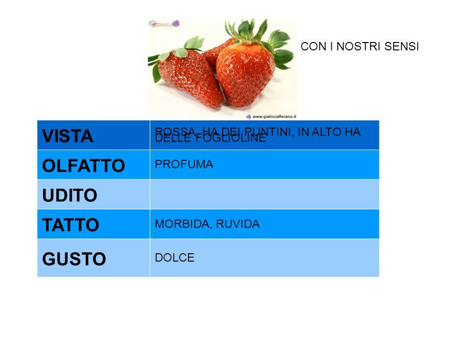VISTA OLFATTO UDITO TATTO GUSTO CON I NOSTRI SENSI