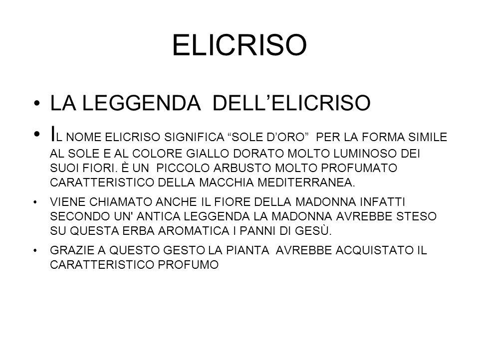 ELICRISO LA LEGGENDA DELL'ELICRISO