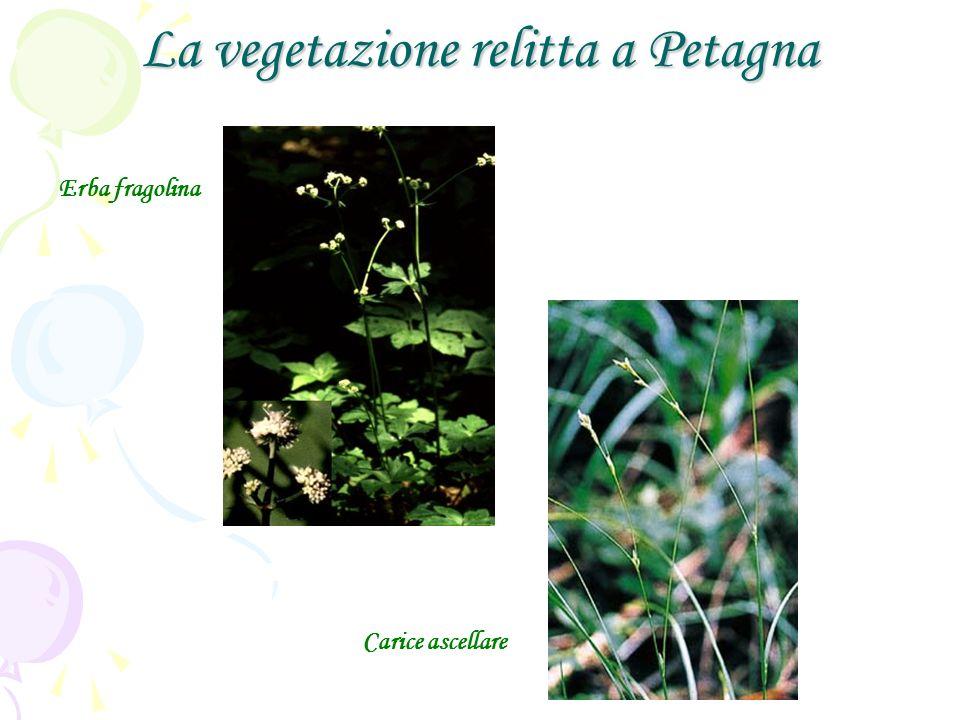 La vegetazione relitta a Petagna