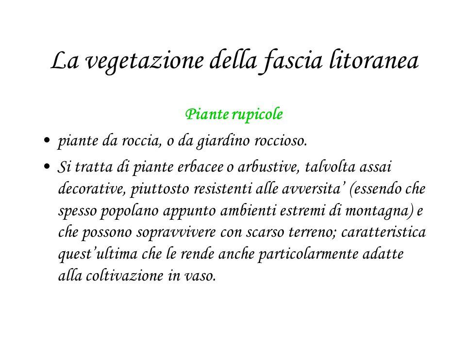 La vegetazione della fascia litoranea