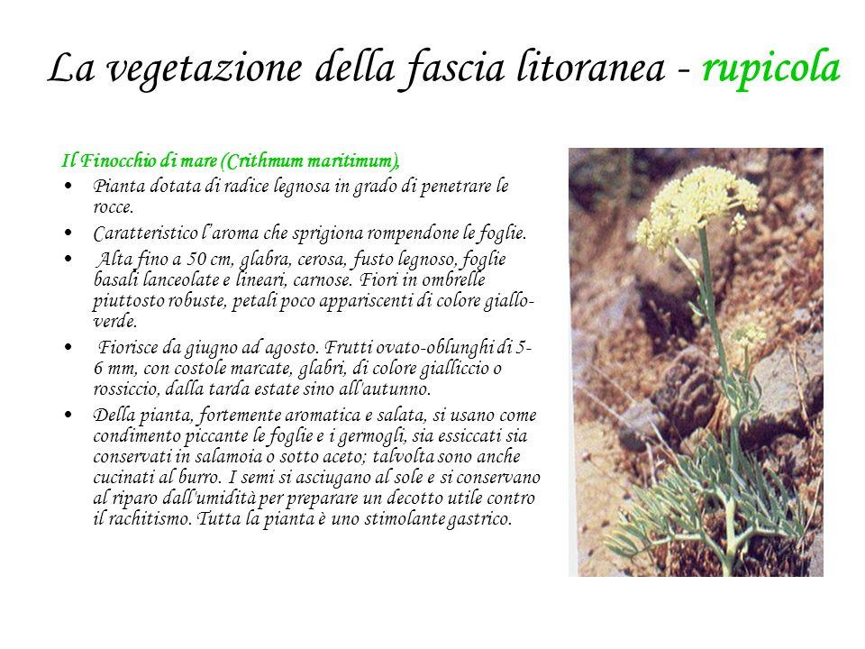 La vegetazione della fascia litoranea - rupicola