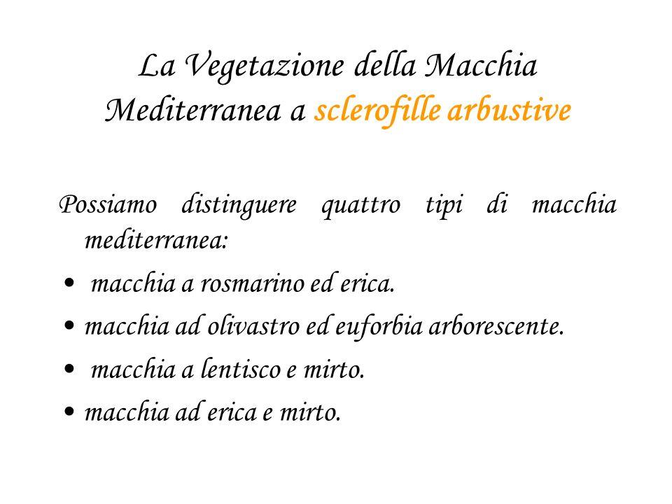 La Vegetazione della Macchia Mediterranea a sclerofille arbustive