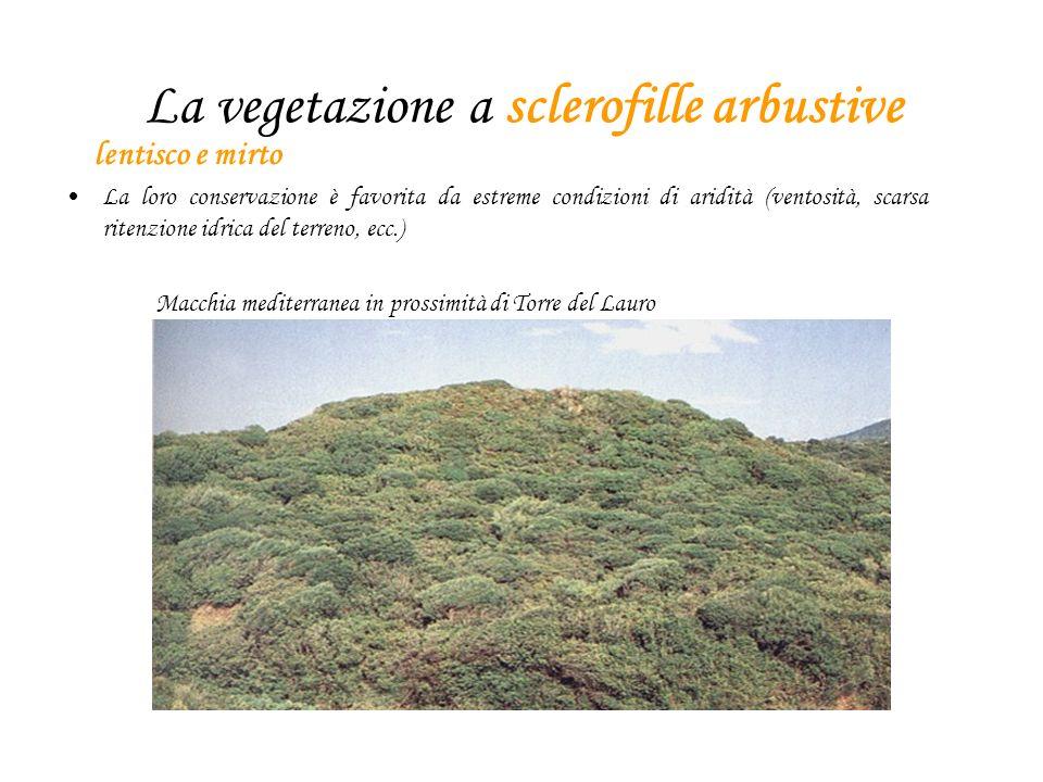 La vegetazione a sclerofille arbustive