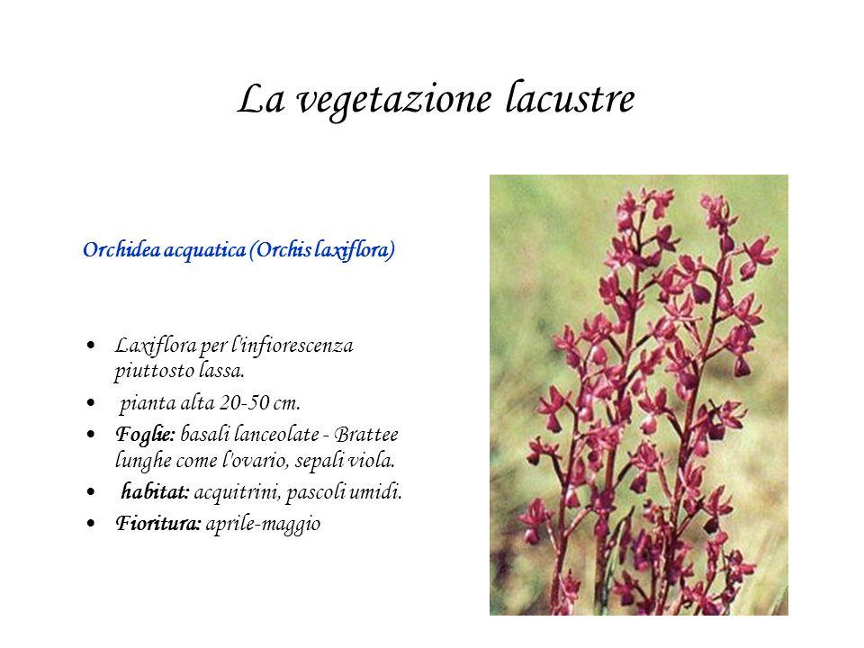 La vegetazione lacustre