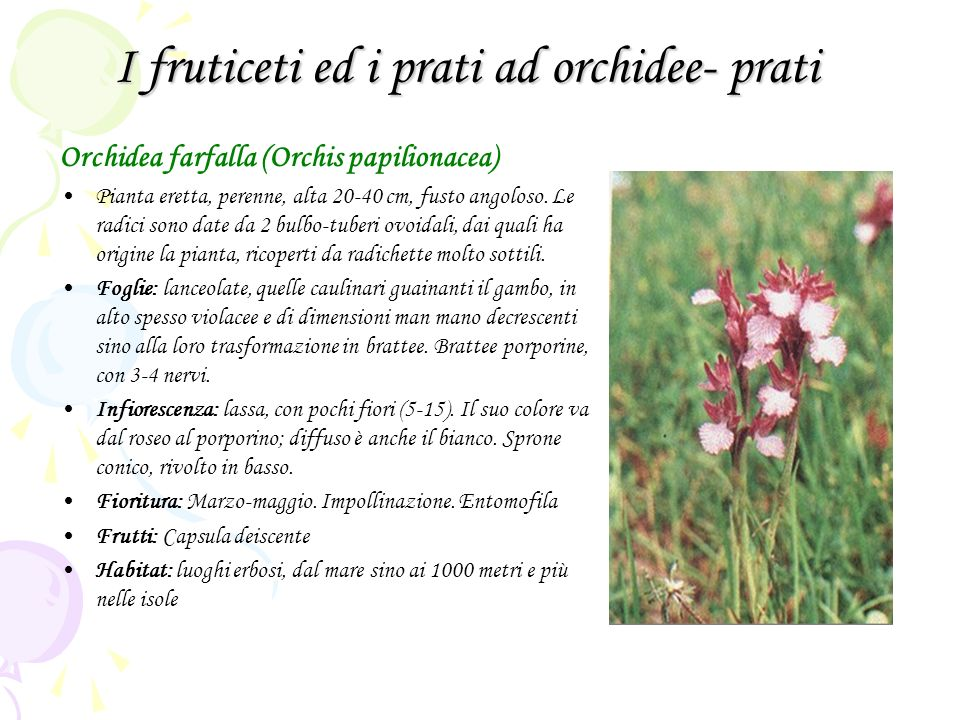 I fruticeti ed i prati ad orchidee- prati