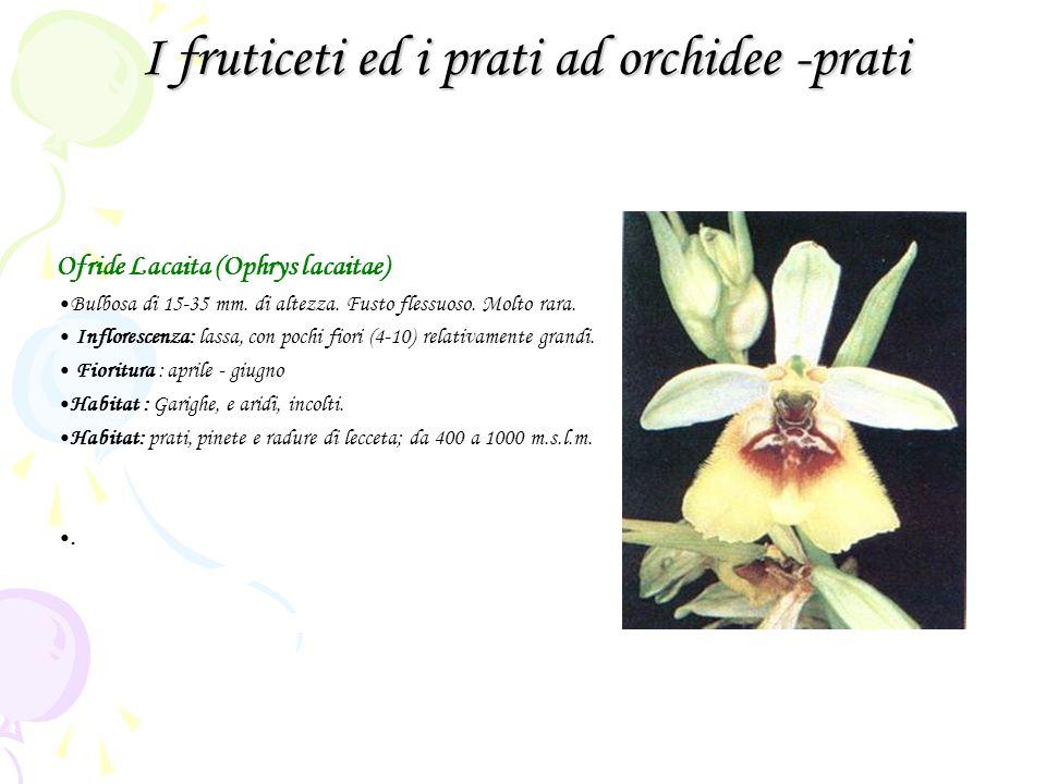 I fruticeti ed i prati ad orchidee -prati