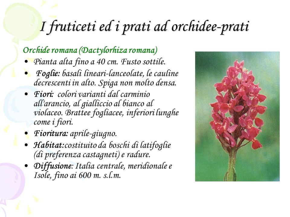 I fruticeti ed i prati ad orchidee-prati