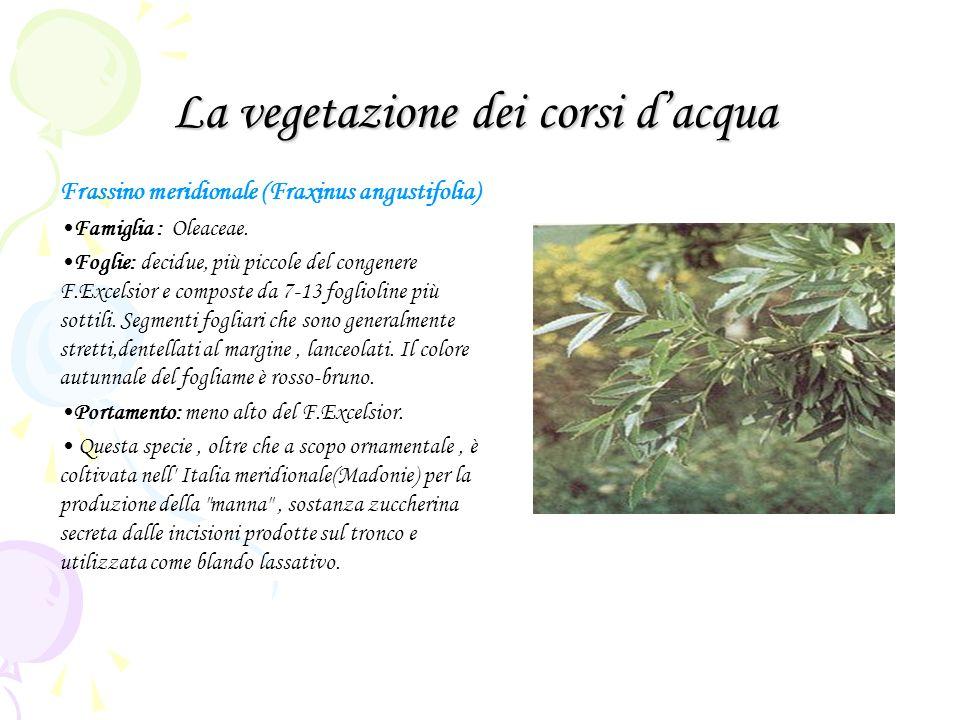 La vegetazione dei corsi d'acqua