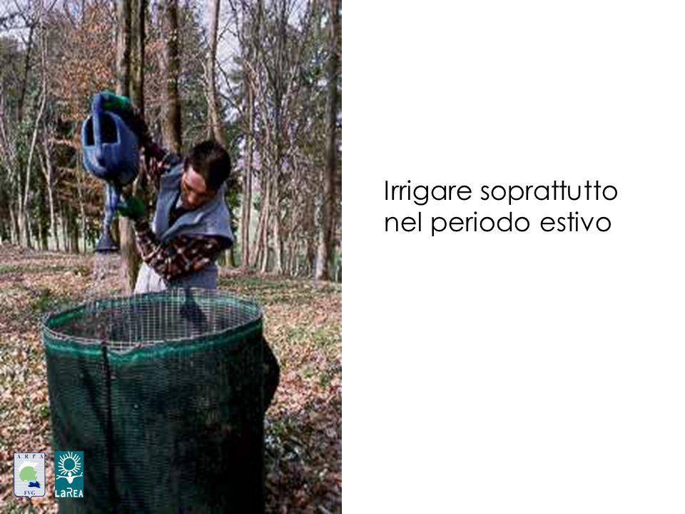 Irrigare soprattutto nel periodo estivo