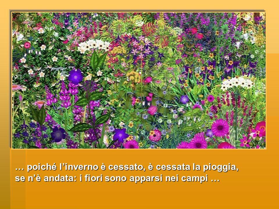 … poiché l'inverno è cessato, è cessata la pioggia, se n'è andata: i fiori sono apparsi nei campi …