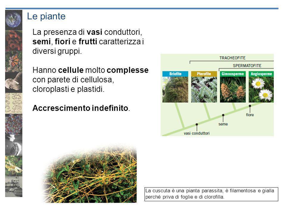 Le piante La presenza di vasi conduttori, semi, fiori e frutti caratterizza i diversi gruppi.