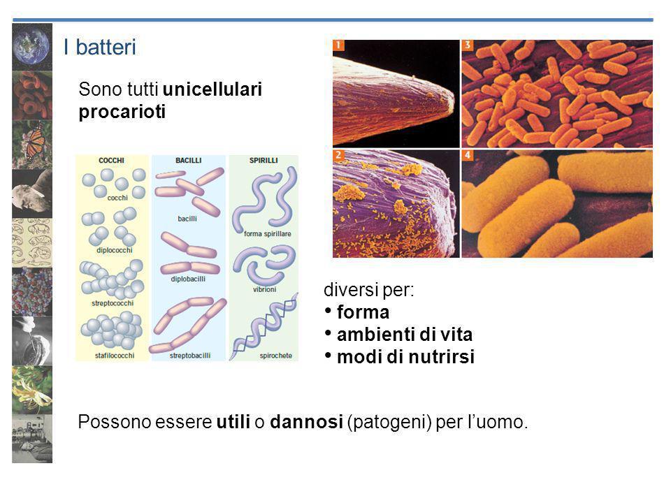 I batteri Sono tutti unicellulari procarioti diversi per: forma