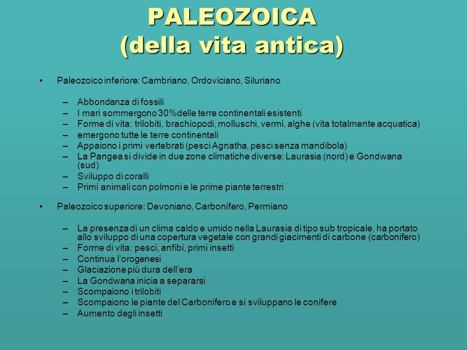 PALEOZOICA (della vita antica)