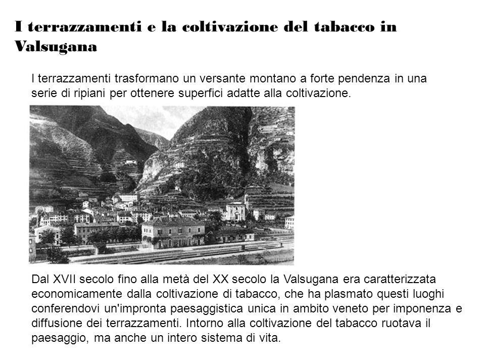 I terrazzamenti e la coltivazione del tabacco in Valsugana