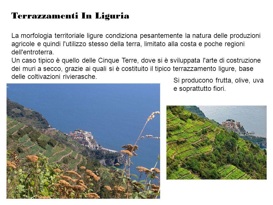 Terrazzamenti In Liguria