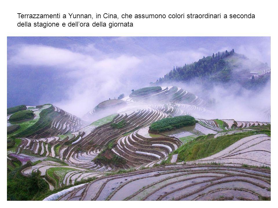 Terrazzamenti a Yunnan, in Cina, che assumono colori straordinari a seconda della stagione e dell'ora della giornata