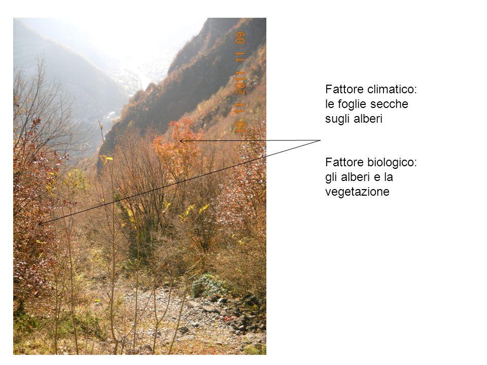Fattore climatico: le foglie secche sugli alberi