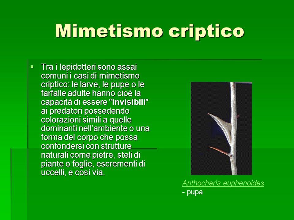 Mimetismo criptico