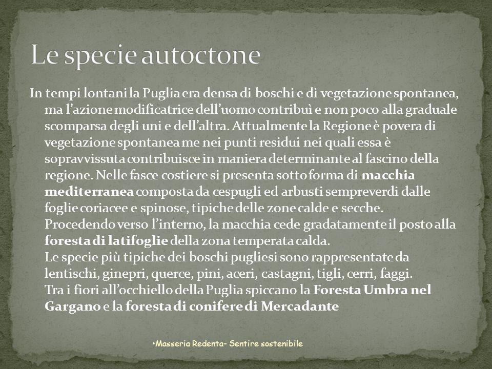Le specie autoctone