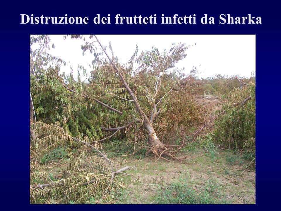 Distruzione dei frutteti infetti da Sharka