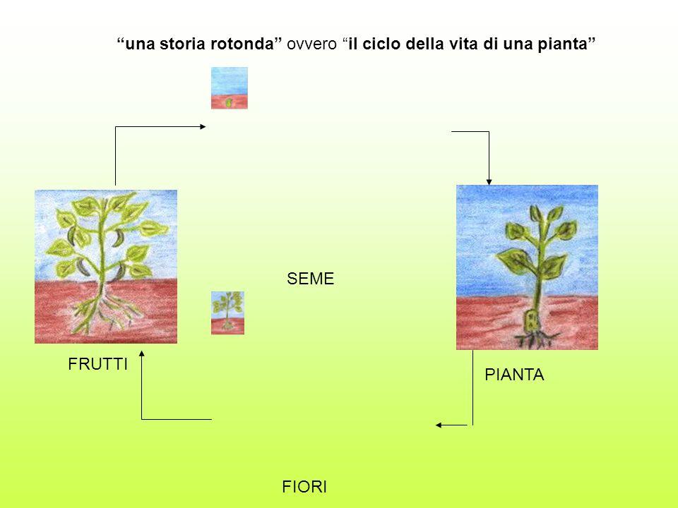 una storia rotonda ovvero il ciclo della vita di una pianta