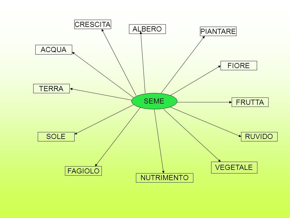 CRESCITA ALBERO PIANTARE ACQUA FIORE TERRA SEME FRUTTA SOLE RUVIDO VEGETALE FAGIOLO NUTRIMENTO