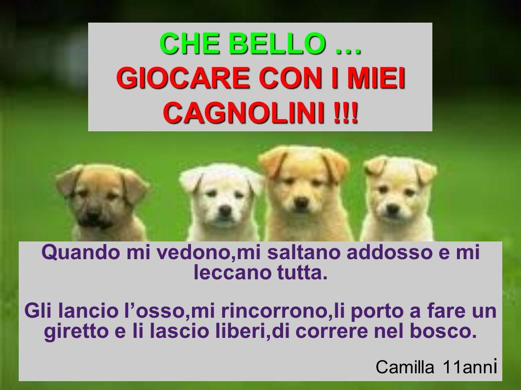 CHE BELLO … GIOCARE CON I MIEI CAGNOLINI !!!
