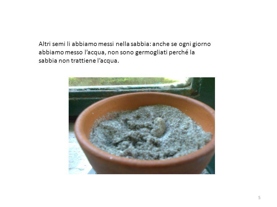 Altri semi li abbiamo messi nella sabbia: anche se ogni giorno abbiamo messo l'acqua, non sono germogliati perché la sabbia non trattiene l'acqua.