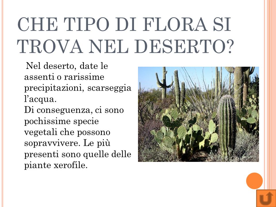 CHE TIPO DI FLORA SI TROVA NEL DESERTO