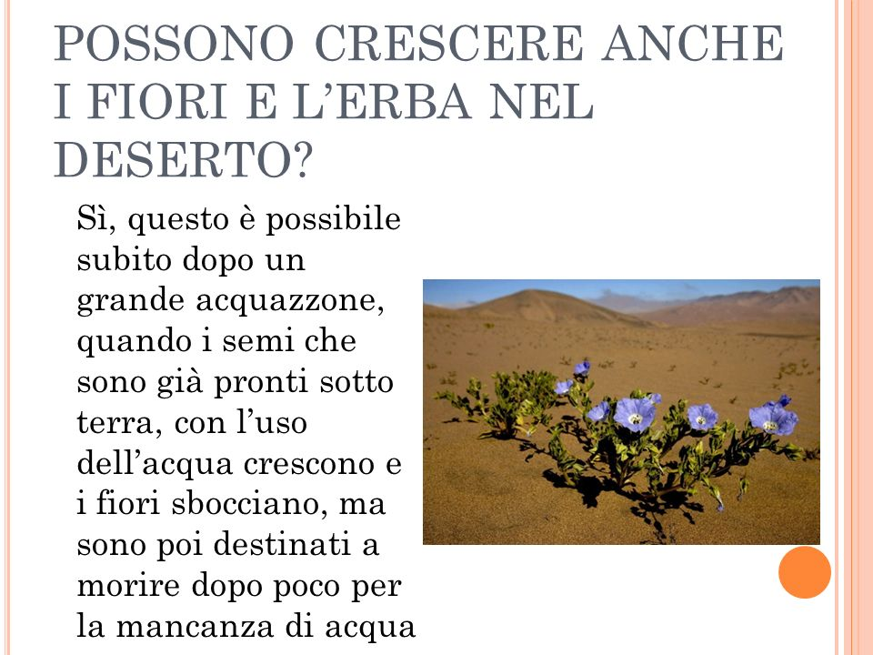 POSSONO CRESCERE ANCHE I FIORI E L'ERBA NEL DESERTO