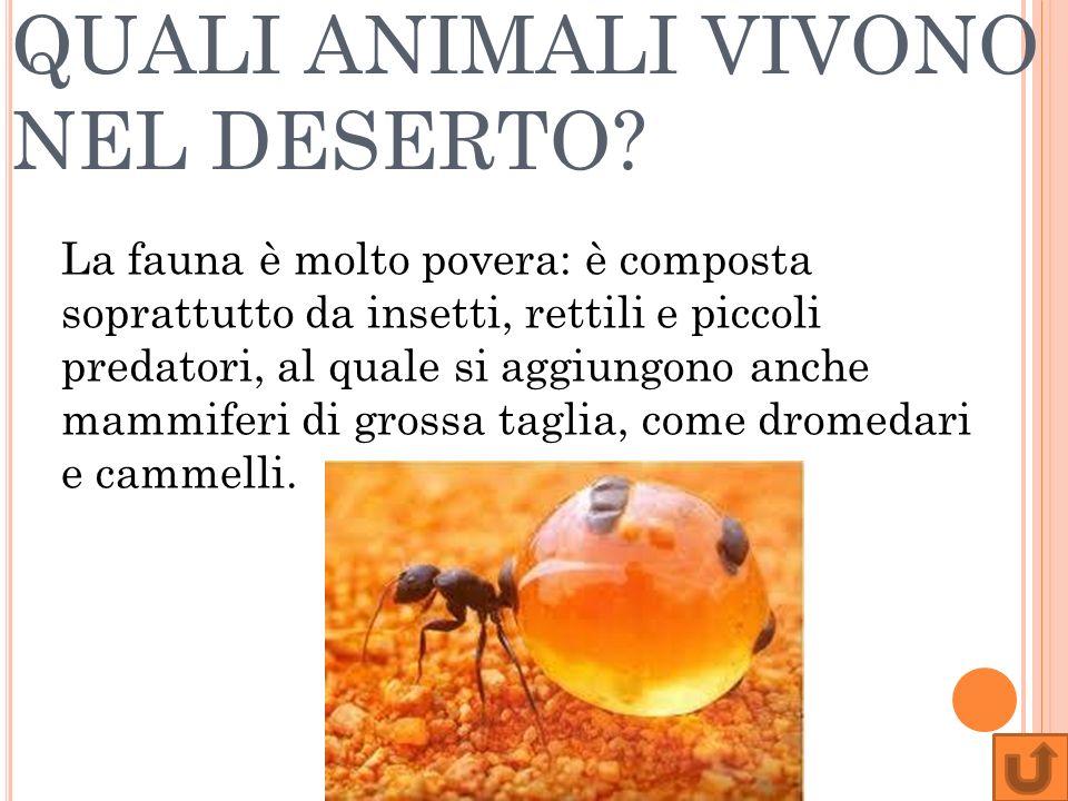 QUALI ANIMALI VIVONO NEL DESERTO