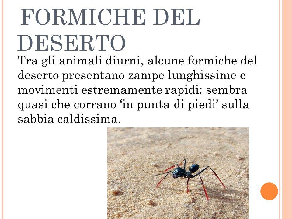 FORMICHE DEL DESERTO